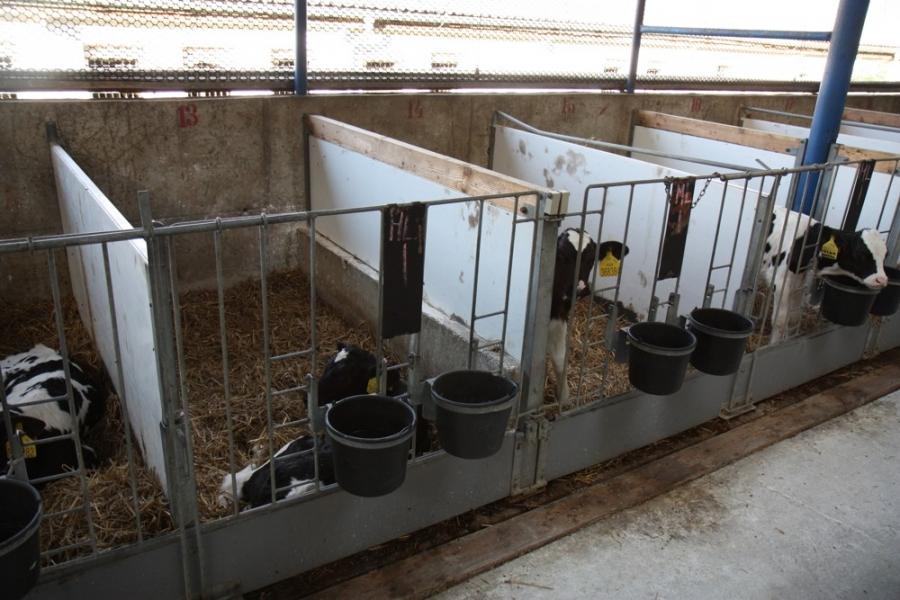 фотографиях нигде загон для откорма бычков фото трубкоцветный